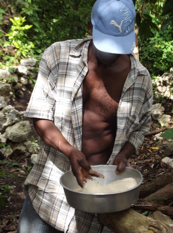 Cleaing the rice, Jamaica