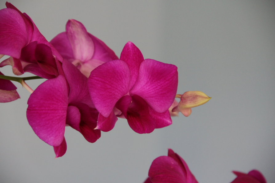 Romancing an Orchid