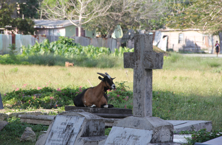 Goat sitting in the shade of a church