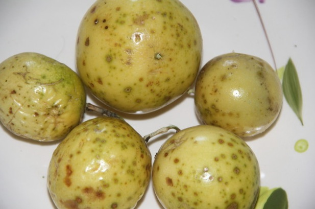 Whole passion fruit